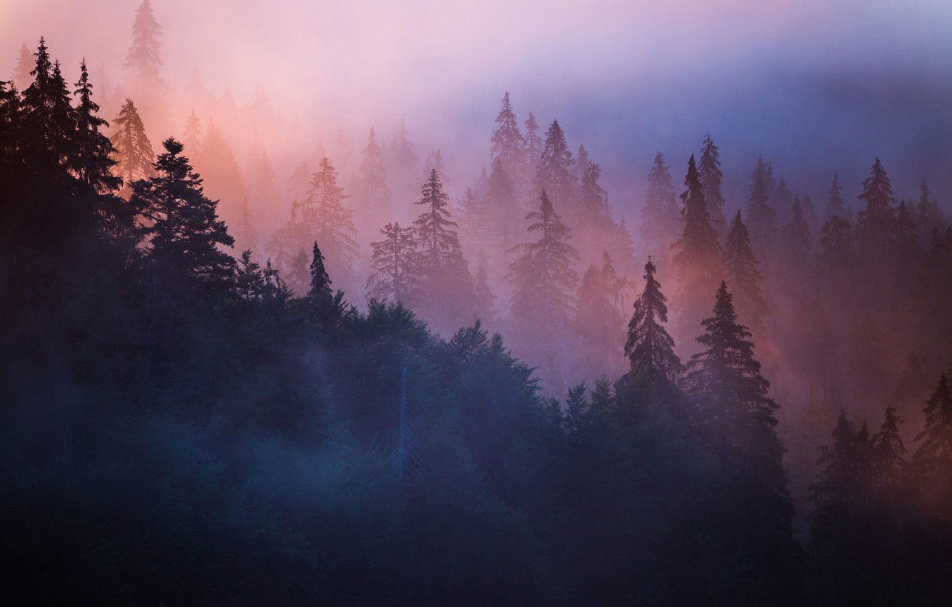 Photo wallpaper forest, trees, nature, fog