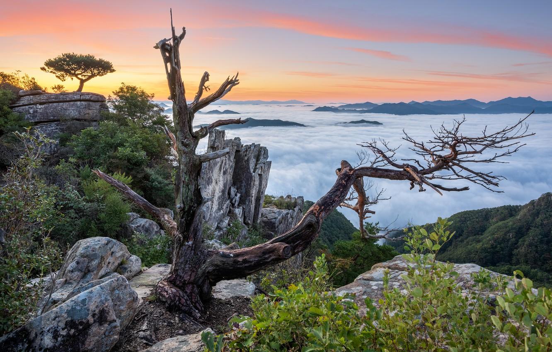 Photo wallpaper clouds, landscape, mountains, nature, vegetation, driftwood, South Korea, reserve