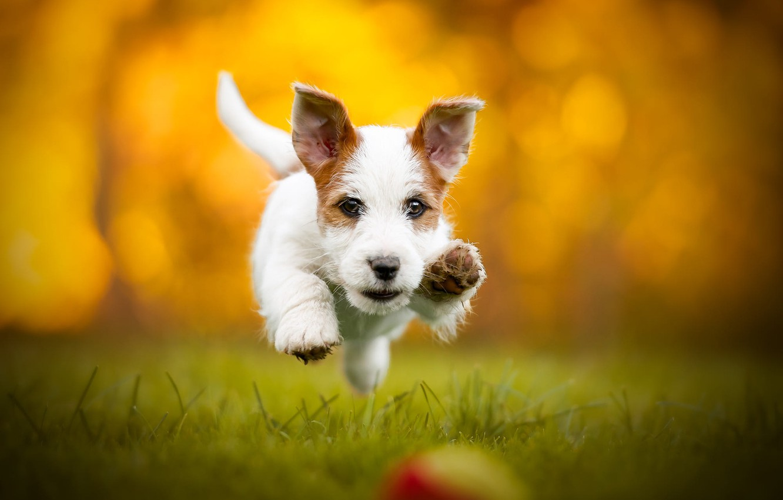 Photo wallpaper autumn, grass, look, face, joy, orange, yellow, nature, pose, glare, background, jump, glade, the game, …