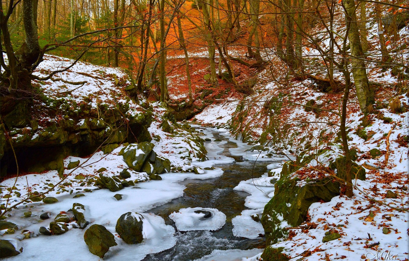 Photo wallpaper Winter, Snow, Forest, Winter, Snow, Forest