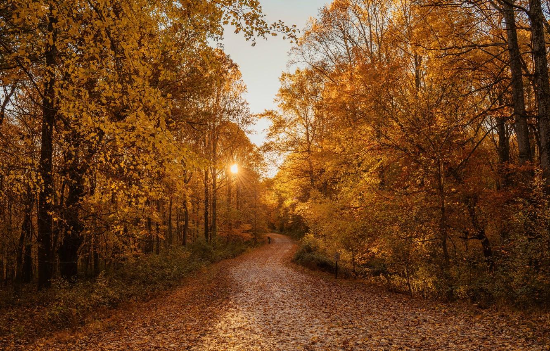 Photo wallpaper road, autumn, leaves, the sun, trees, sunset, nature, foliage