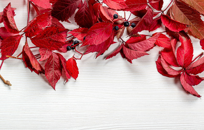 Photo wallpaper leaves, berries, table, postcard, template, blank