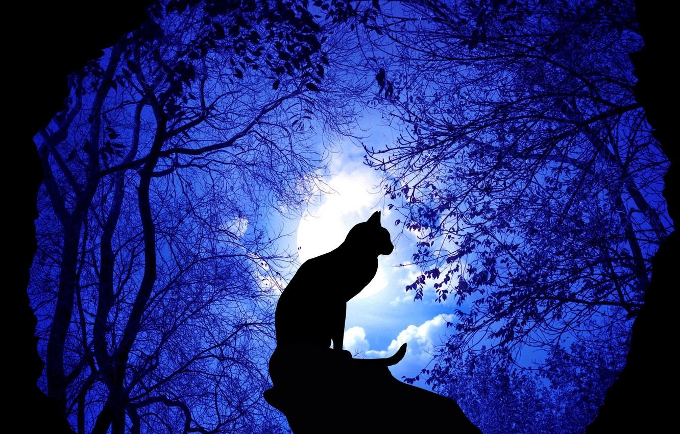 Photo wallpaper forest, night, cat, illustration, rendeting