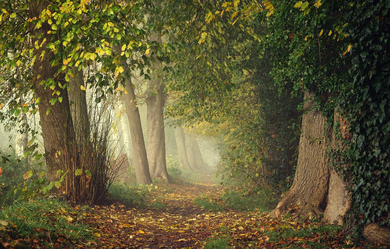 Photo wallpaper greens, autumn, forest, leaves, branches, fog, Park, thickets, branch, trunks, foliage, track, haze, alley, falling …