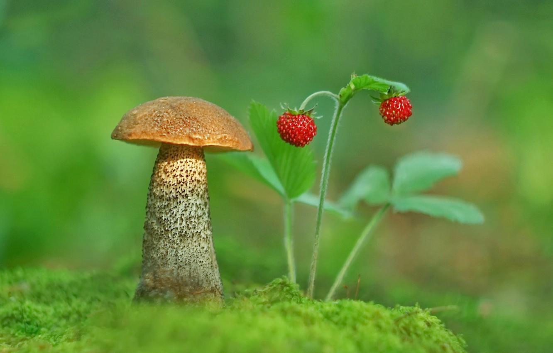 Photo wallpaper photo, mushroom, moss, strawberries