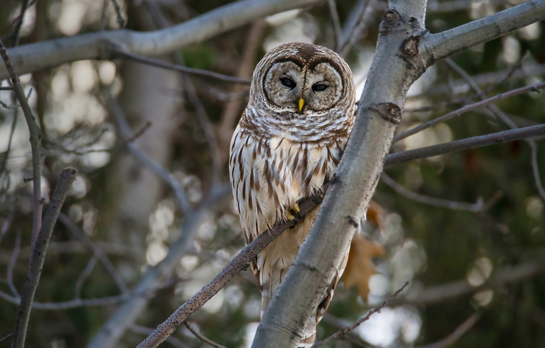 Photo wallpaper branches, the dark background, tree, owl, bird, owl