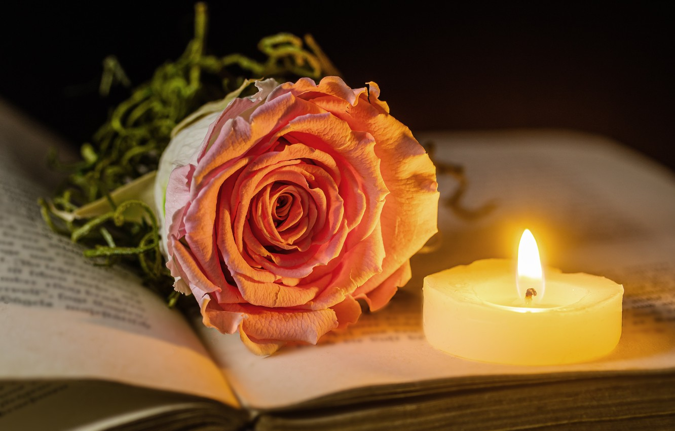 Wallpaper flame, rose, candle, book images for desktop, section ...