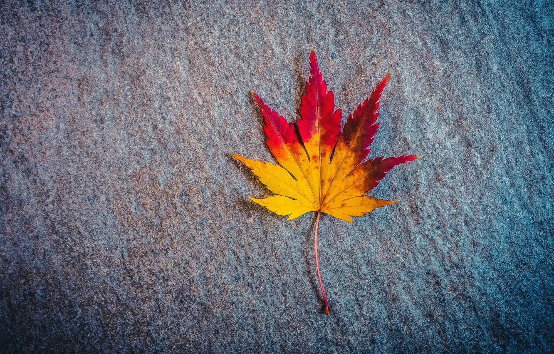 Photo wallpaper autumn, surface, sheet, maple