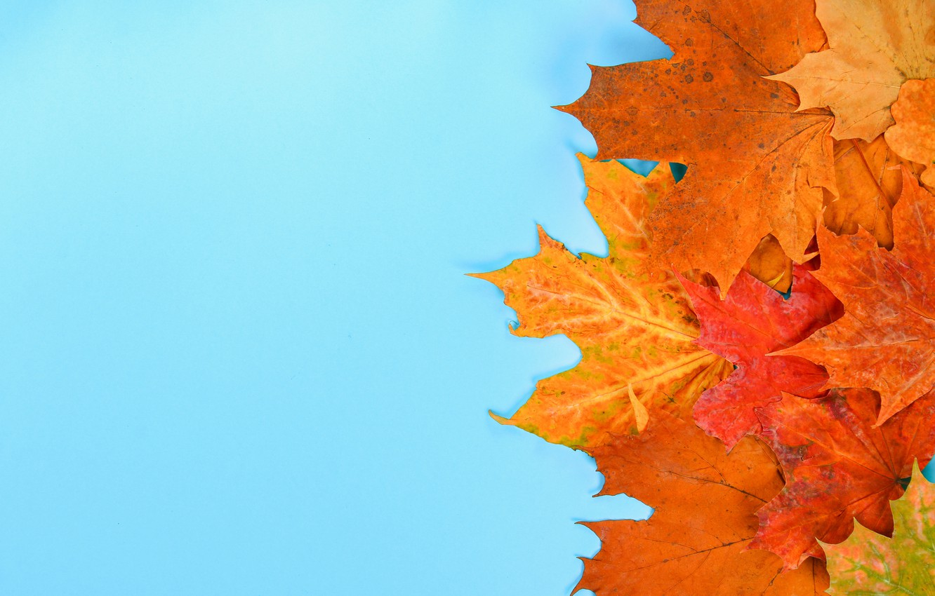 Photo wallpaper autumn, leaves, background, colorful, maple, autumn, leaves, autumn, maple
