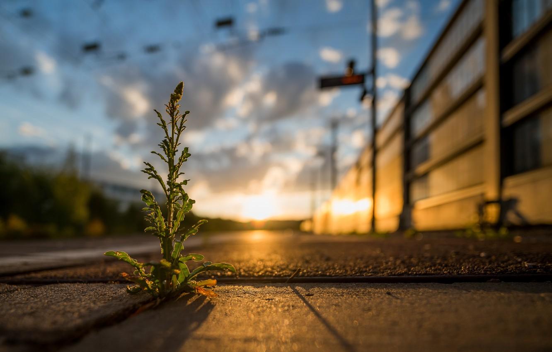 Photo wallpaper grass, macro, light, focus, bokeh