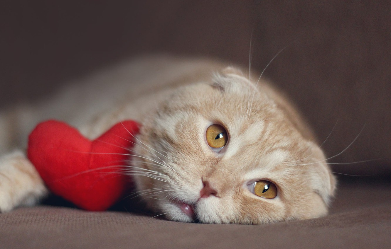 Photo wallpaper cat, cat, face, heart, fold, red, lies