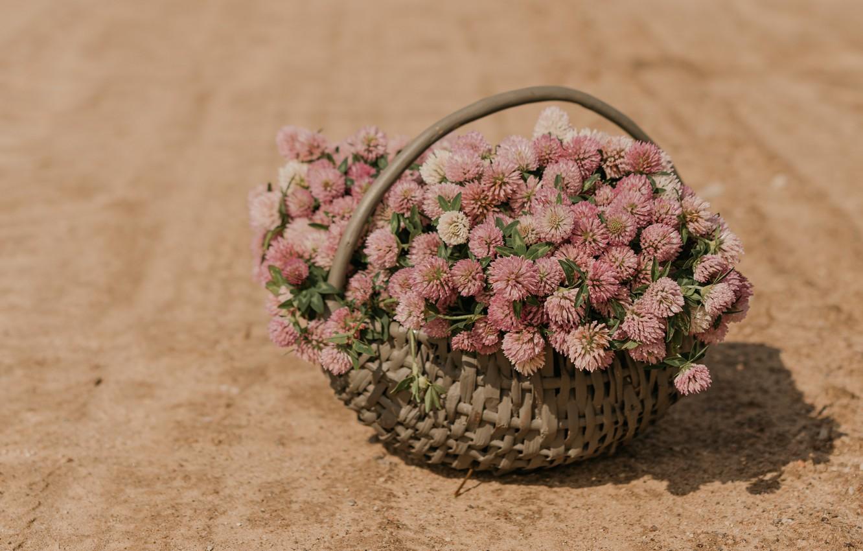 Photo wallpaper flowers, basket, clover