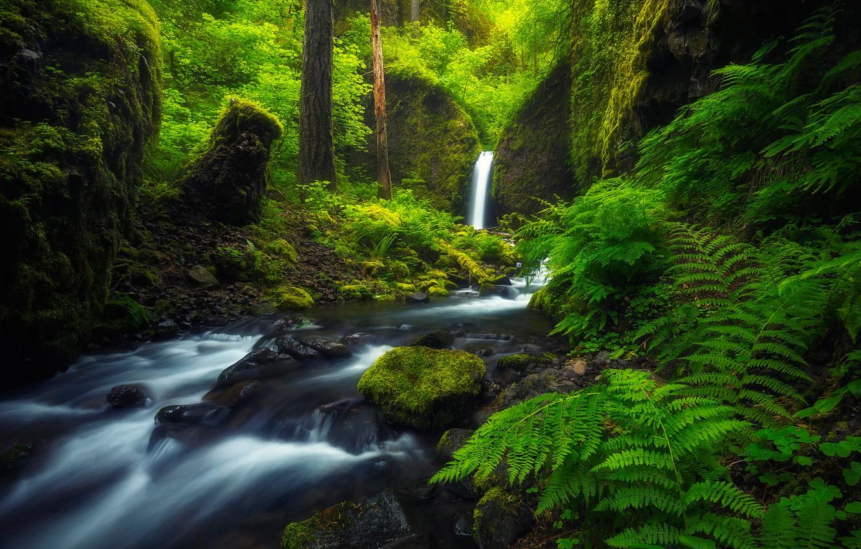 Photo wallpaper forest, river, stream, waterfall, Oregon, fern, Oregon, Columbia River Gorge, Mossy Grotto Falls, Ruckel Creek, …