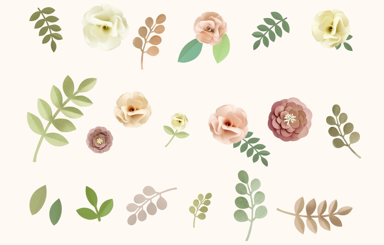 Wallpaper Flowers Roses Texture Pink White Background Rose