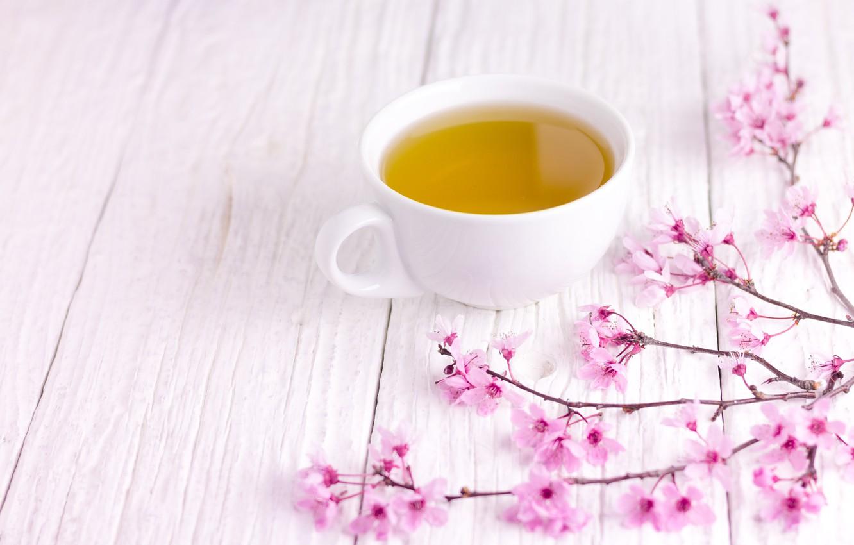Photo wallpaper branches, spring, Sakura, flowering, wood, pink, blossom, cup, sakura, cherry, spring, tea, bloom, Cup of …