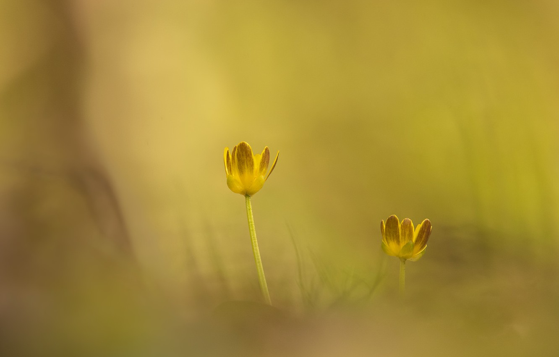 Photo wallpaper light, flowers, nature