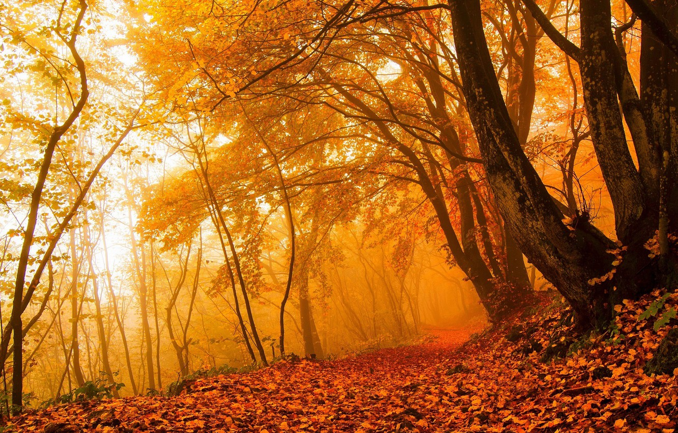 Photo wallpaper autumn, forest, leaves, light, trees, branches, nature, fog, Park, branch, trunks, foliage, morning, yellow, red, …