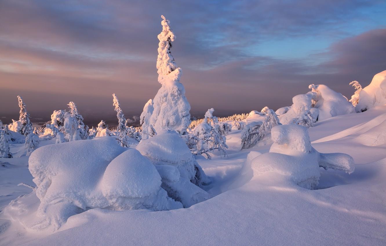 Photo wallpaper winter, snow, trees, sunset, ate, The Kola Peninsula, Maxim Evdokimov, Kandalaksha