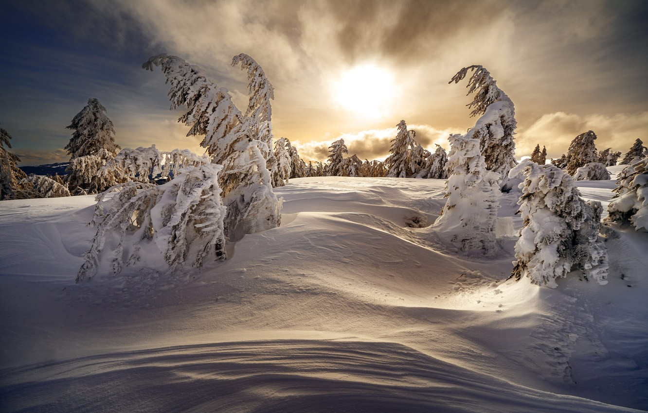 Photo wallpaper winter, forest, the sky, clouds, light, snow, sunset, nature, dawn, hills, branch, in the snow, …