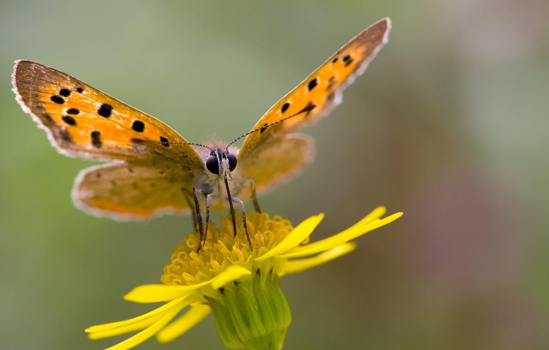 Photo wallpaper flower, butterfly, bokeh