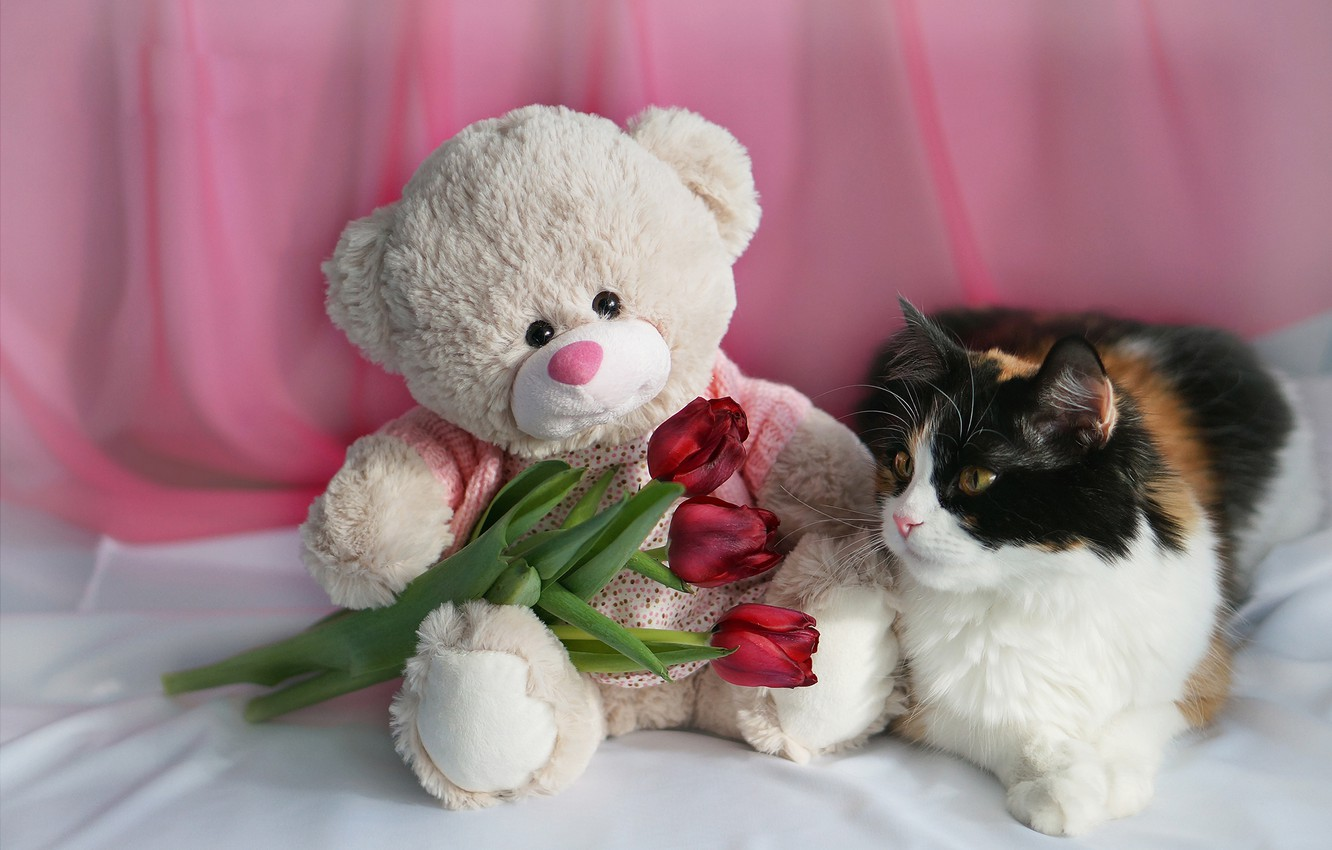 Photo wallpaper cat, flowers, toy, bear, tulips, March 8