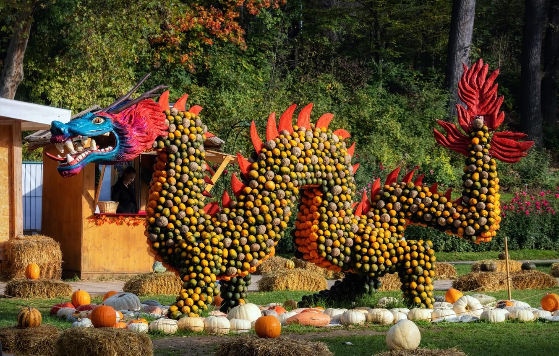 Photo wallpaper photo, dragon, Germany, pumpkin, festival