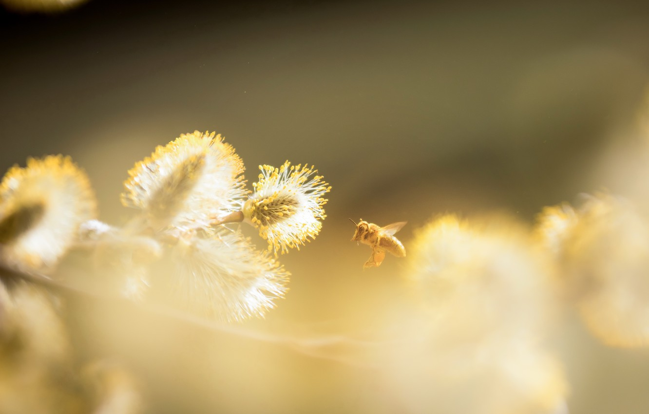 Photo wallpaper nature, bee, spring