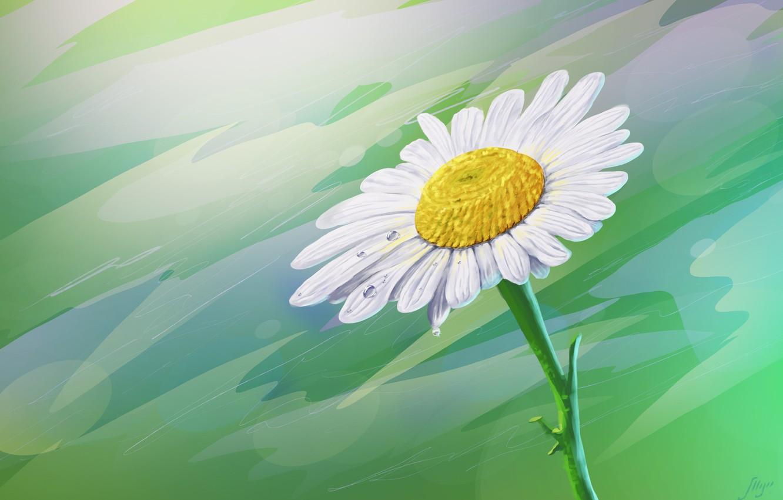 Photo wallpaper flower, Rosa, Daisy, art, drop, Juri Mukhanov, Сhamomile