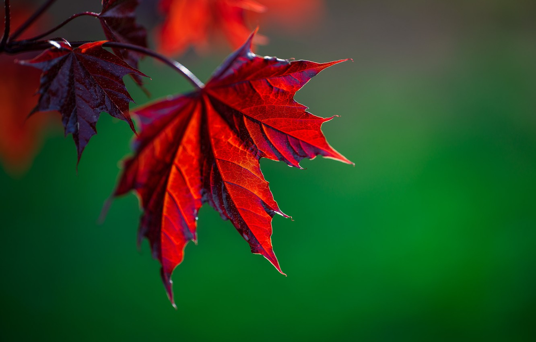 Photo wallpaper leaves, branch, bokeh