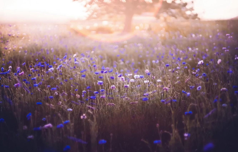Photo wallpaper field, flowers, fog, morning