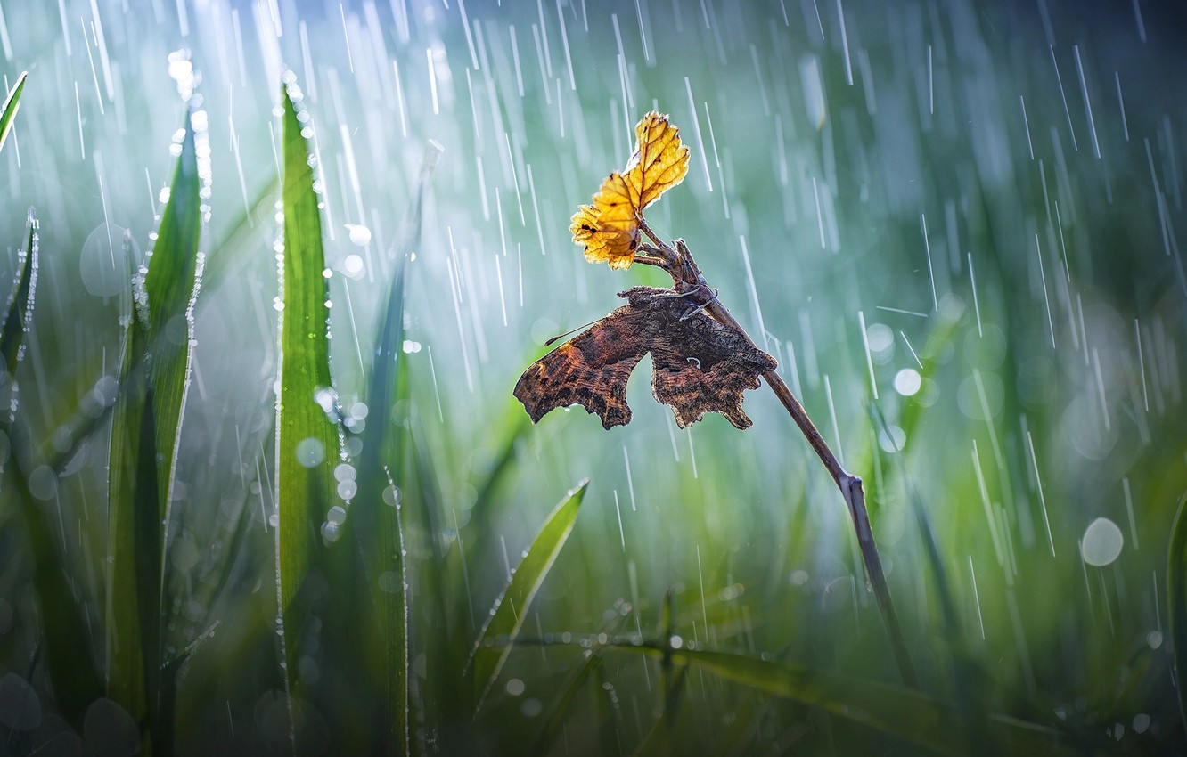 Photo wallpaper grass, macro, nature, sheet, sprig, rain, butterfly, bokeh, Roberto Aldrovandi