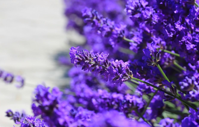 Photo wallpaper flowers, background, lavender
