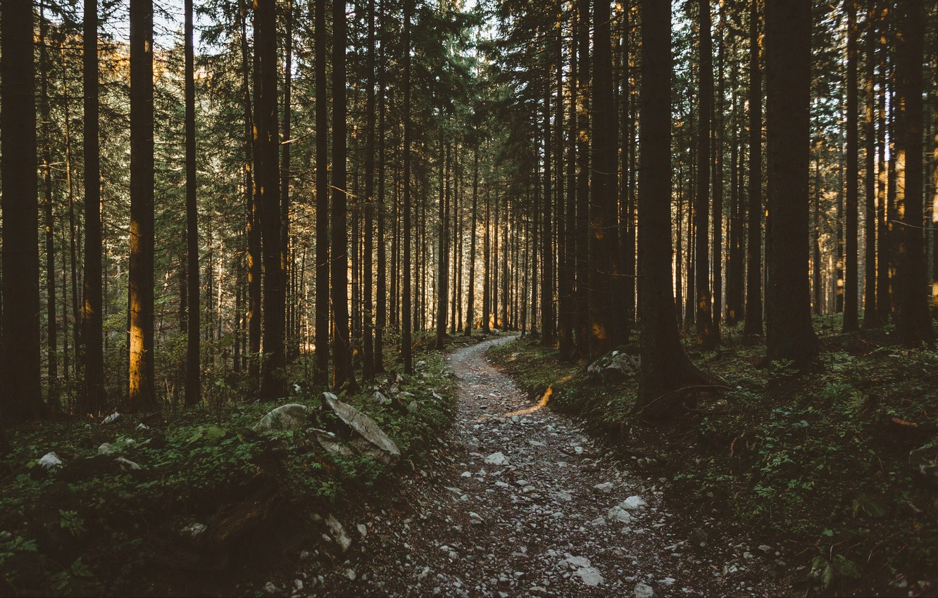 Photo wallpaper road, forest, trees, nature