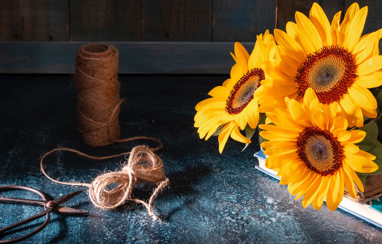 Wallpaper Light Sunflowers Flowers The Dark Background Table Board Books Bouquet Rope Yellow Still Life Thread Trio Bow Twine Sunflower Images For Desktop Section Cvety Download