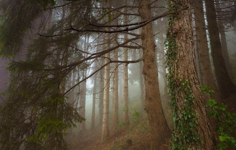 Photo wallpaper forest, landscape, nature, beauty, ivy