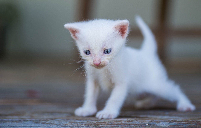 Photo wallpaper white, baby, kitty, bokeh, blue eyes