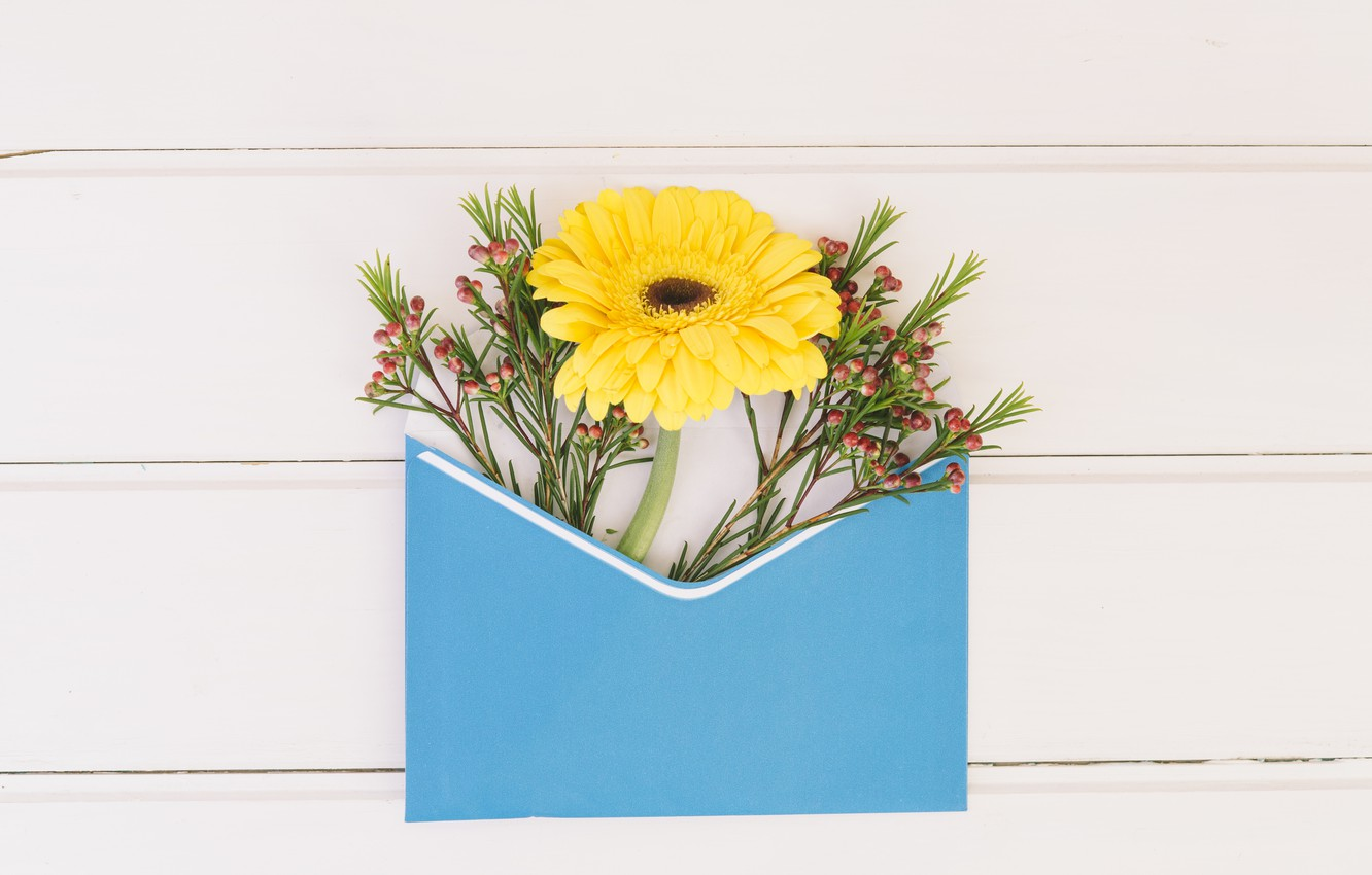Photo wallpaper flowers, yellow, the envelope, gerbera, composition