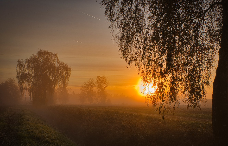 Photo wallpaper field, the sky, grass, the sun, trees, fog, dawn