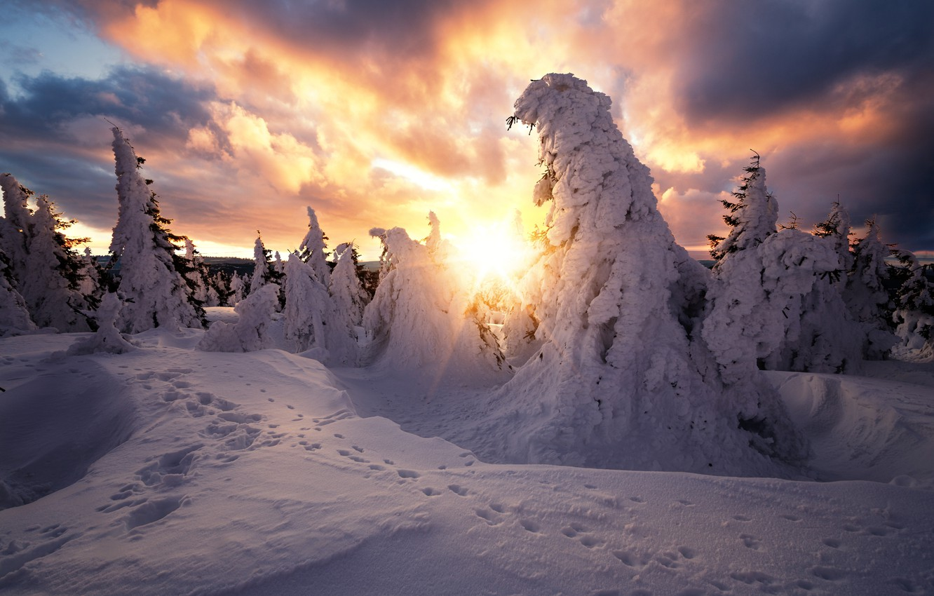 Photo wallpaper winter, the sun, rays, snow, trees, landscape, traces, clouds, nature, ate