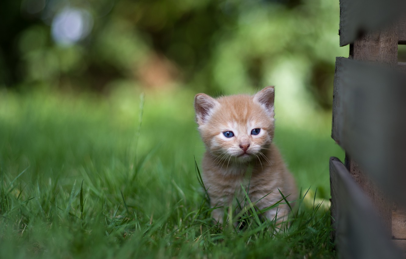 Photo wallpaper grass, small, baby, red, kitty