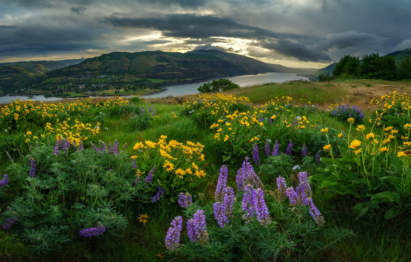 Photo wallpaper field, summer, the sky, clouds, flowers, mountains, clouds, river, hills, shore, yellow, meadow, pond, lilac, …