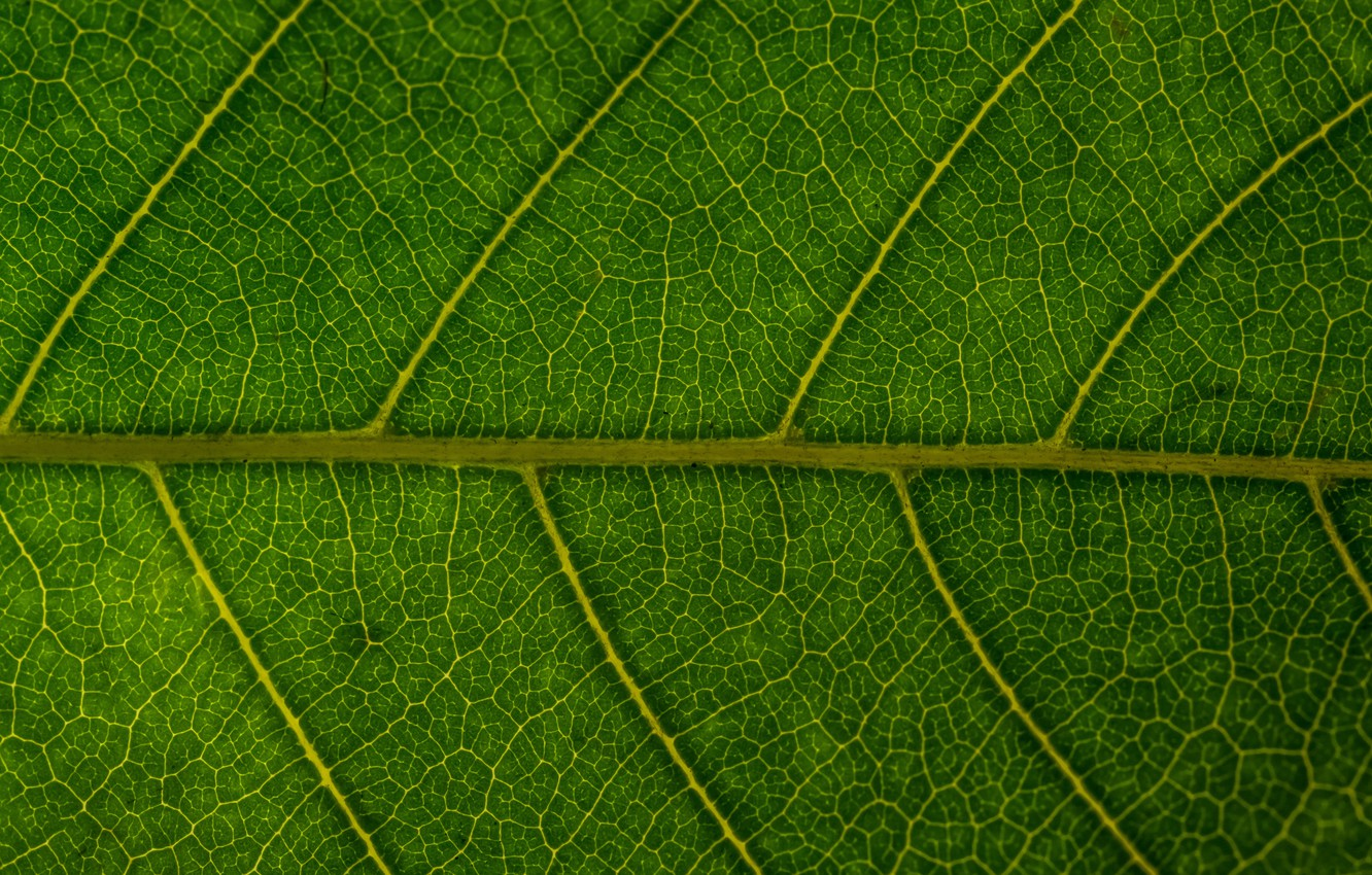 Photo wallpaper macro, sheet, green, background, green, texture, macro, leaf
