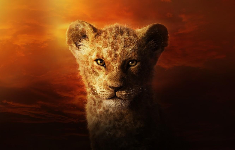 Wallpaper Cat Leo Face The Lion King Simba Cat Lion
