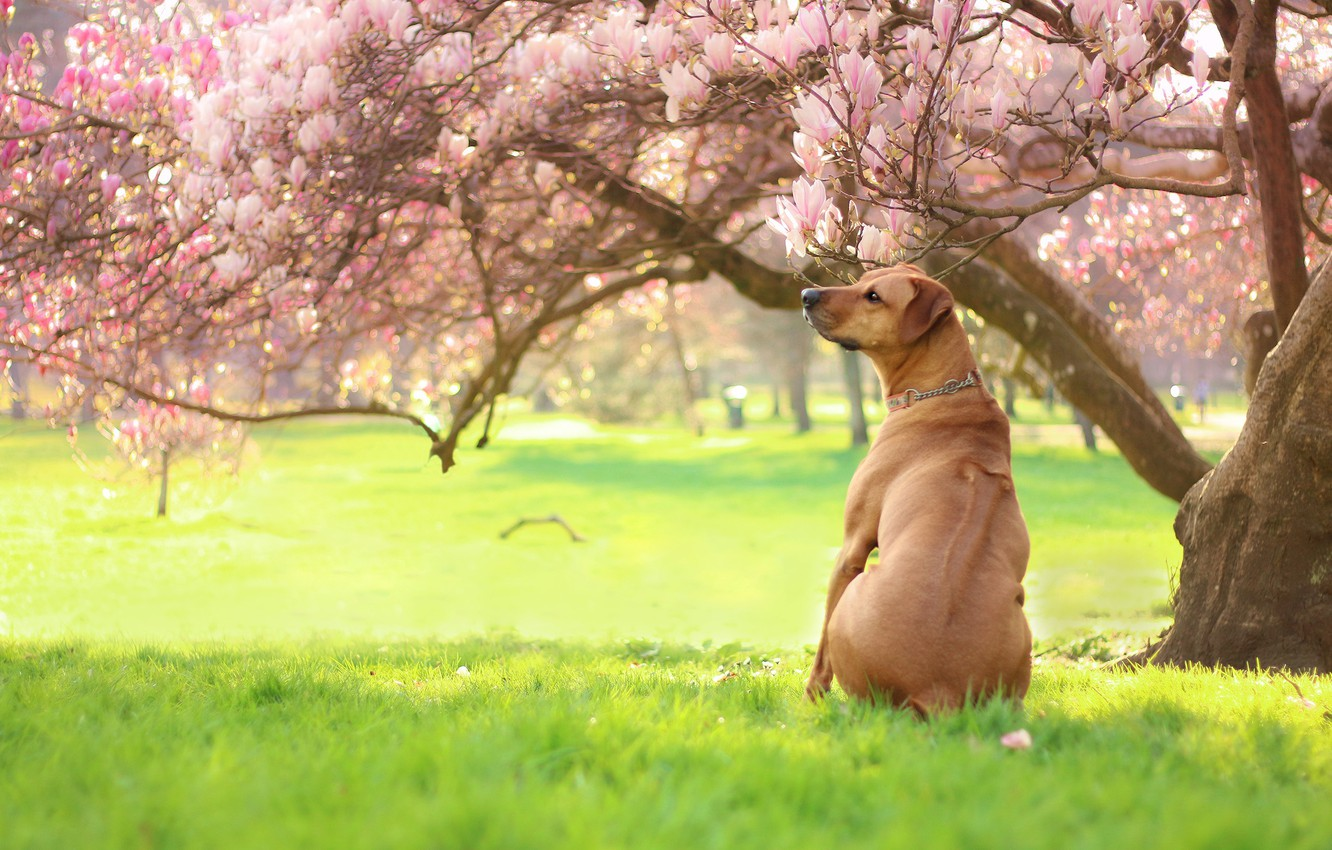 Photo wallpaper greens, grass, light, trees, flowers, branches, Park, mood, lawn, glade, back, dog, spring, garden, red, …