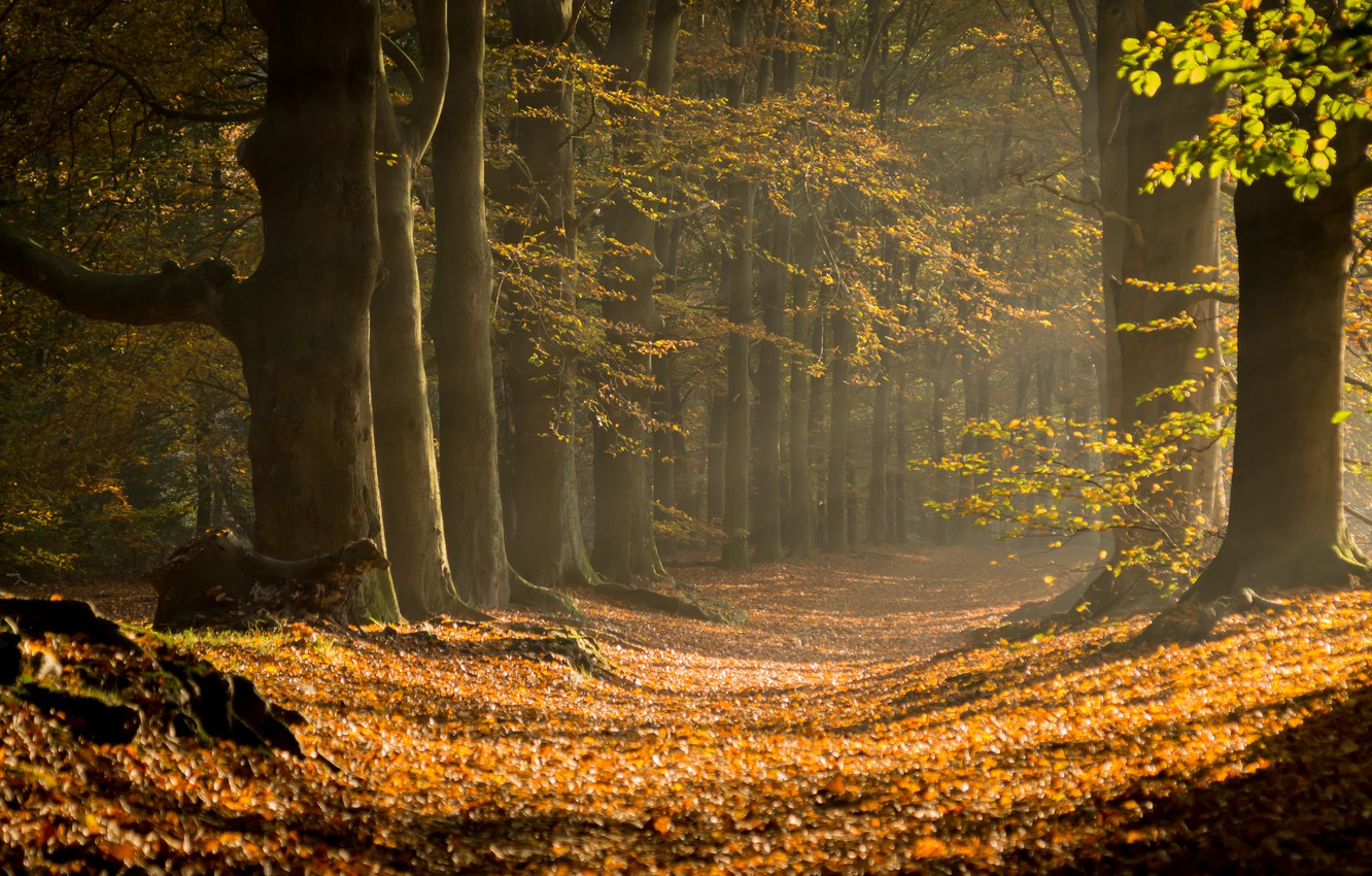 Photo wallpaper autumn, forest, trees, nature, trail, sunlight