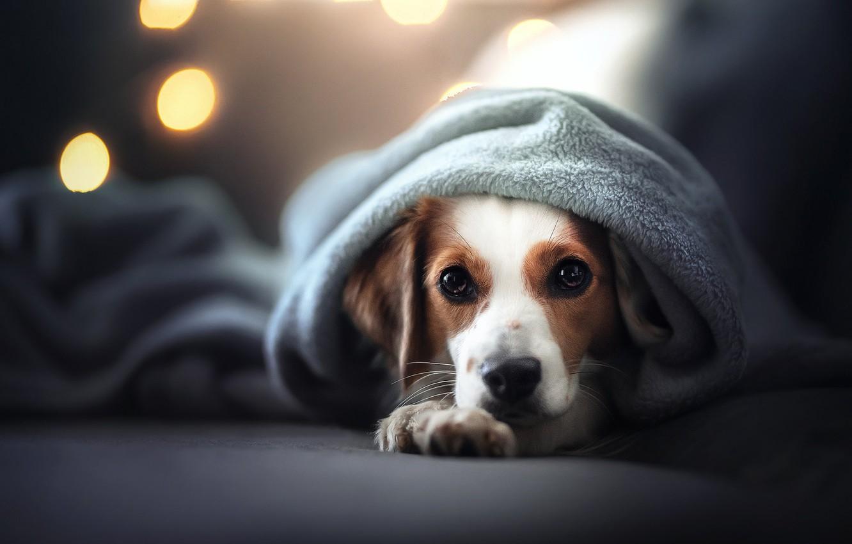 Photo wallpaper look, face, dog, plaid