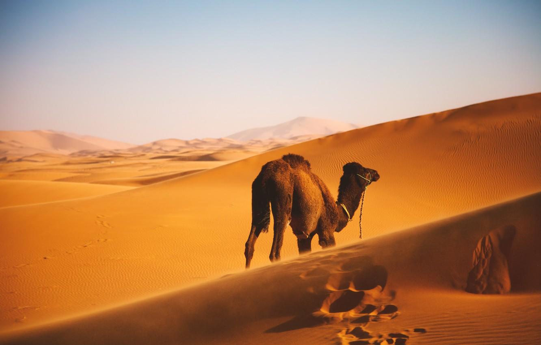 Wallpaper Landscape Wallpaper Camel Desert Images For