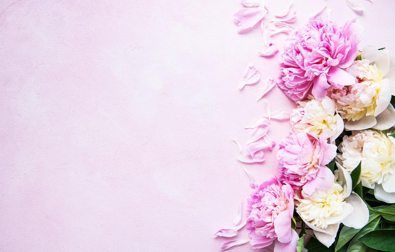 Photo wallpaper flowers, petals, pink background, pink, flowers, peonies, petals, peonies