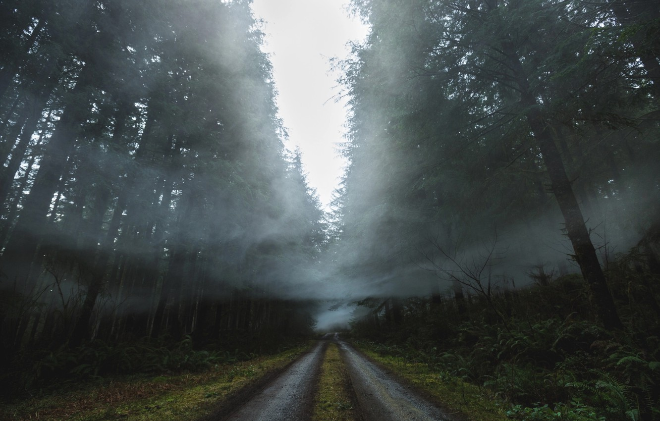 Photo wallpaper road, forest, nature, fog, smoke, haze