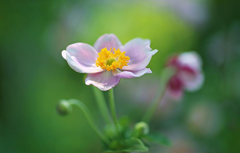 Photo wallpaper flower, macro, bokeh